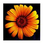 Yellow Daisy Fine Art Tile Coaster