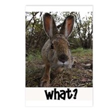 What up Bunny Postcards (Package of 8)