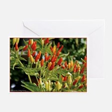 SACANA CHILE Note Cards (Pk of 10)