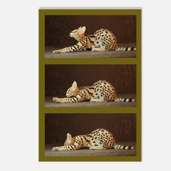 African Serval Postcards (Package of 8)