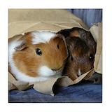Guinea pig Drink Coasters