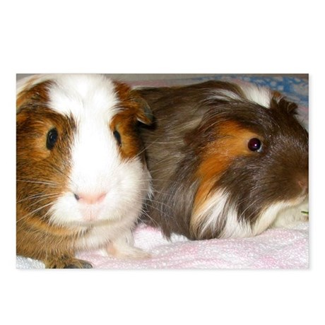 Guinea Pig Buddies Postcards (Package of 8)