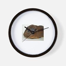 Guinea Pig Photo Shoot Wall Clock