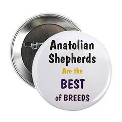 Anatolian Shepherd Best of Breeds 2.25