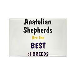 Anatolian Shepherd Best of Breeds Rectangle Magnet