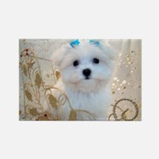 Maltese Blue Bows Rectangle Magnet