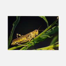 Grasshopper Rectangle Magnet