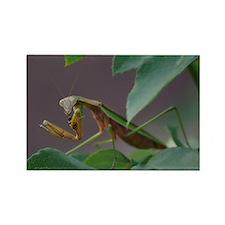 Praying Mantis Eating Wasp Rectangle Magnet