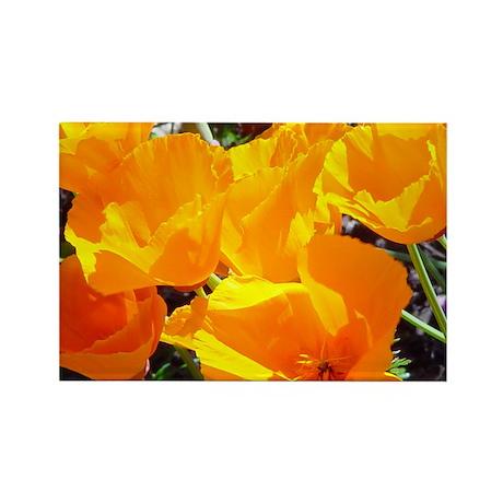 California Poppy gift Rectangle Magnet (100 pack)