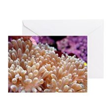 Reef Life Greeting Cards (Pk of 10)