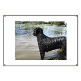 Beware of portuguese water dog Banners