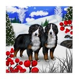 Bernese mountain dog Tile Coasters