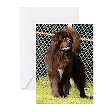 Funny Newfoundland dog Greeting Cards (Pk of 10)