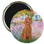 Garden/Std Poodle (apricot) Magnet