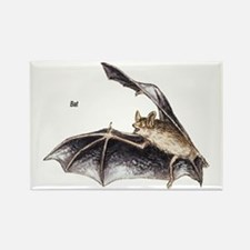 Bat for Bat Lovers Rectangle Magnet