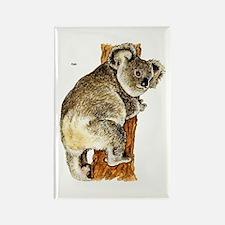 Koala Australian Rectangle Magnet