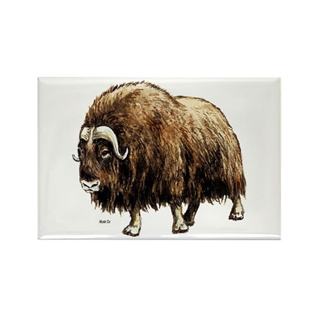 Musk Ox Artic Rectangle Magnet (10 pack)