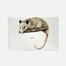 Opossum Possum Rectangle Magnet