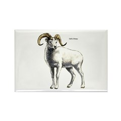 Dall's Sheep Rectangle Magnet (10 pack)