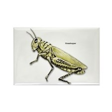 Grasshopper Insect Rectangle Magnet