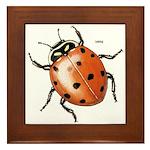 Ladybug Beetle Framed Tile
