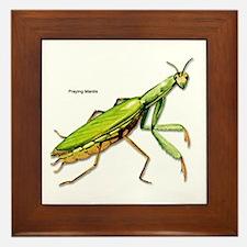 Praying Mantis Insect Framed Tile