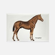Thoroughbred Horse Rectangle Magnet
