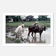 Japanese farmers w/water buffalo postcards