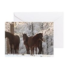 Holiday Horse Greeting Cards, photos by elpace