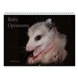 Baby possums Wall Calendars