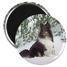 Winter Pine Sheltie Magnet
