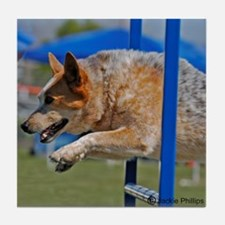 Red Australian Cattle Dog Jumping in Agility Tile