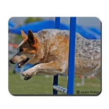Red Australian Cattle Dog Jumping in Agility Mouse