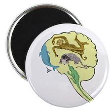 Evolved Brain-b MAGNET