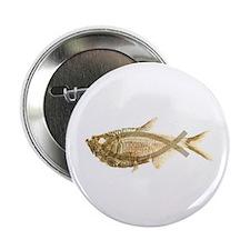 "Evolution/Christian fish 2.25"" Button"