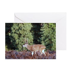 Buck in Afternoon Sunlight Greeting Card