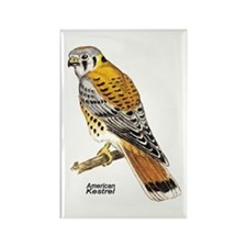 American Kestrel Bird Rectangle Magnet