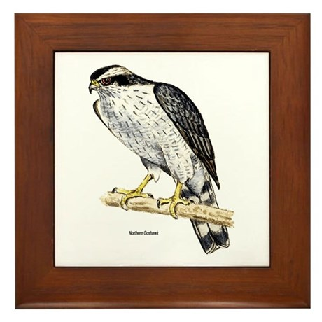 Northern Goshawk Hawk Framed Tile