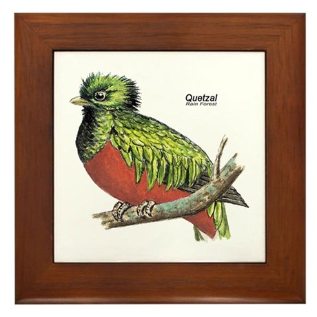 Quetzal Rain Forest Bird Framed Tile