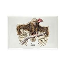 Turkey Vulture Bird Rectangle Magnet