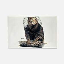 Marmoset Monkey Rectangle Magnet
