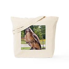 Red tail hawk (1) Tote Bag