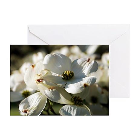 White Dogwood Greeting Cards (Pk of 10)