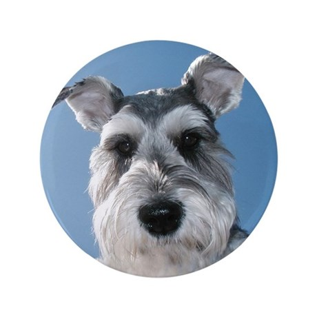 "Miniature Schnauzer 3.5"" Button"