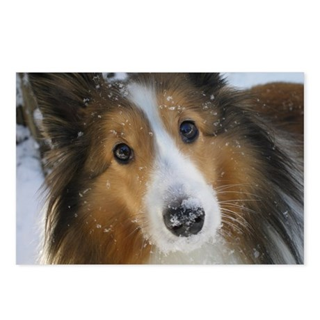 Snow Whiskers Postcards (Package of 8)