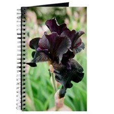 Zoli's artistic images / Black Iris > Journal