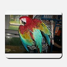 Jackson the Macaw Mousepad