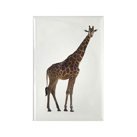 giraffe13 Rectangle Magnet (100 pack)