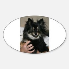 Sable Oval Decal