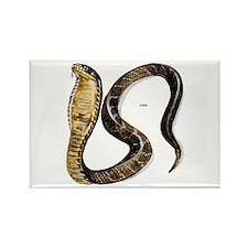 Cobra Snake Rectangle Magnet